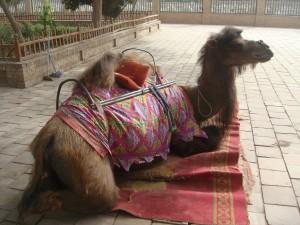 Selv kamelen var utslitt etter turen.